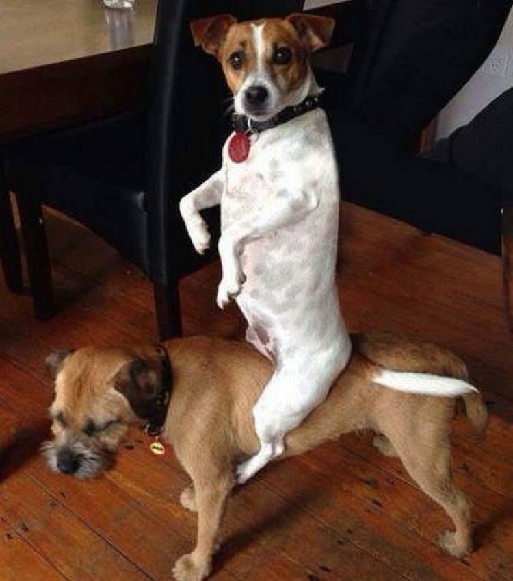 "15 Guilty Dogs Who Were Busted! - ""Aren"