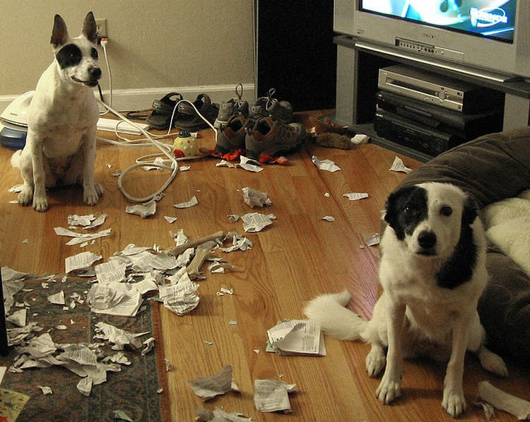 "15 Guilty Dogs Who Were Busted! - ""These are not the dogs you are looking for. Move along..."""