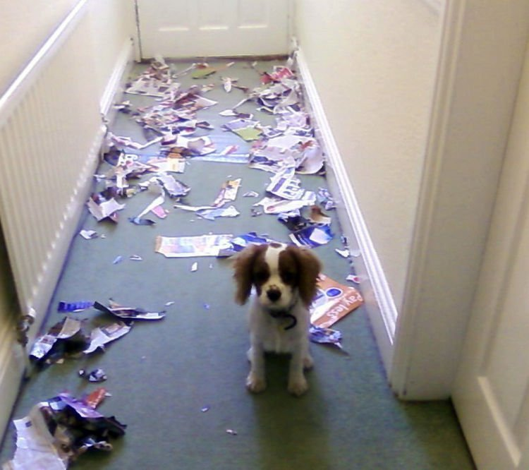 "15 Guilty Dogs Who Were Busted! - ""I swear it wasn't my fault."""