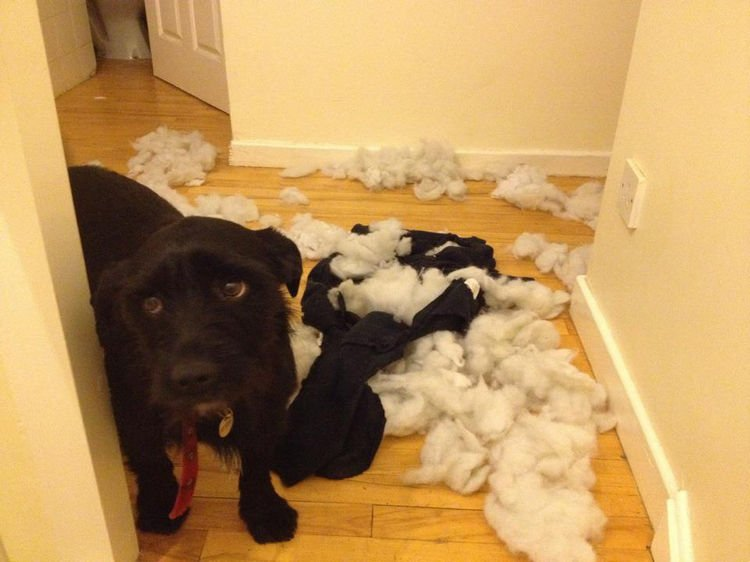 "15 Guilty Dogs Who Were Busted! - ""Can you find it in your heart to forgive me?"""