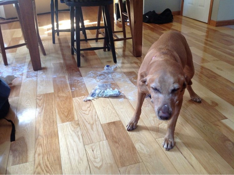 "15 Guilty Dogs Who Were Busted! - ""What evidence?"""