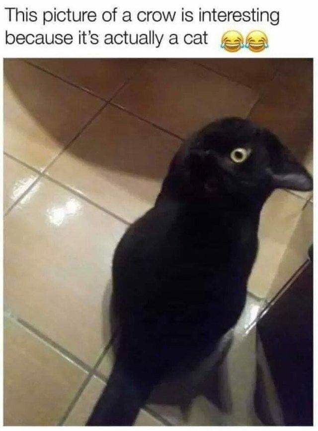 Cat sitting at an angle that makes it look like a crow