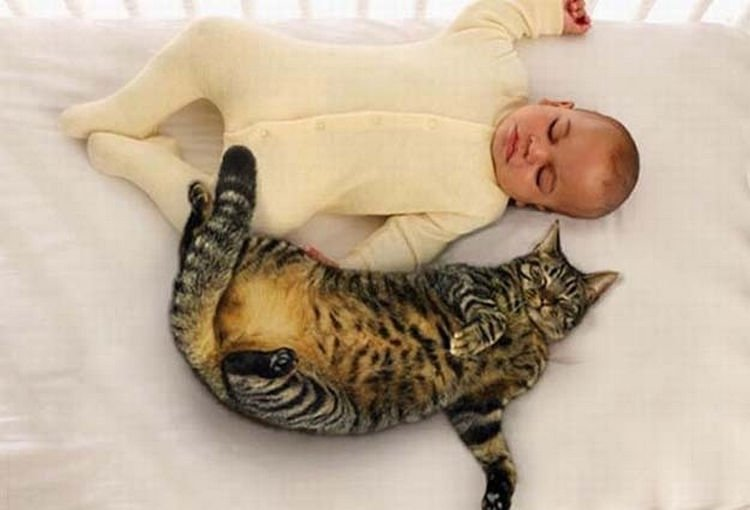 "21 Cats Babysitting Babies - ""You stay on your side of the bed."""