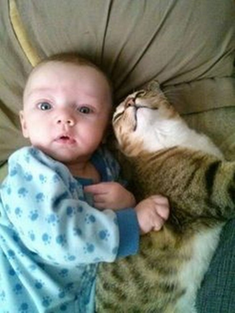 "21 Cats Babysitting Babies - ""My back is itchy, can you scratch it?"""