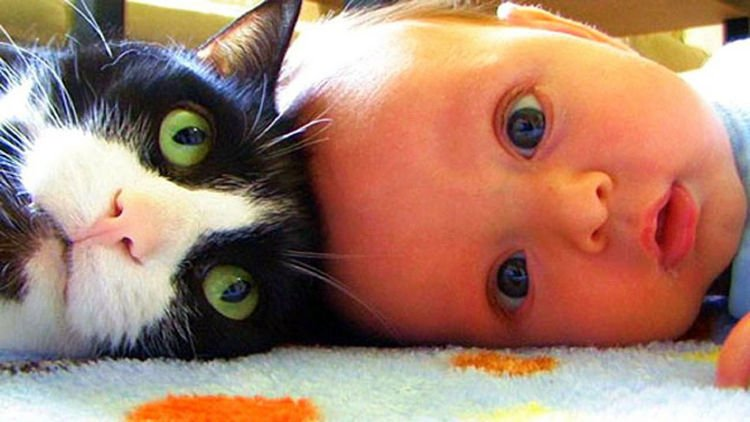 "21 Cats Babysitting Babies - ""He"