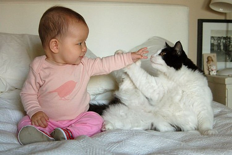 "21 Cats Babysitting Babies - ""Boop! I caught your nose."""