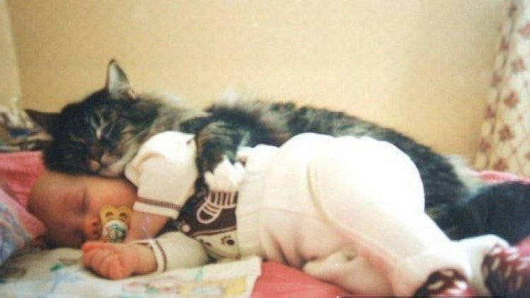 "21 Cats Babysitting Babies - ""I finally get to be the big spoon."""