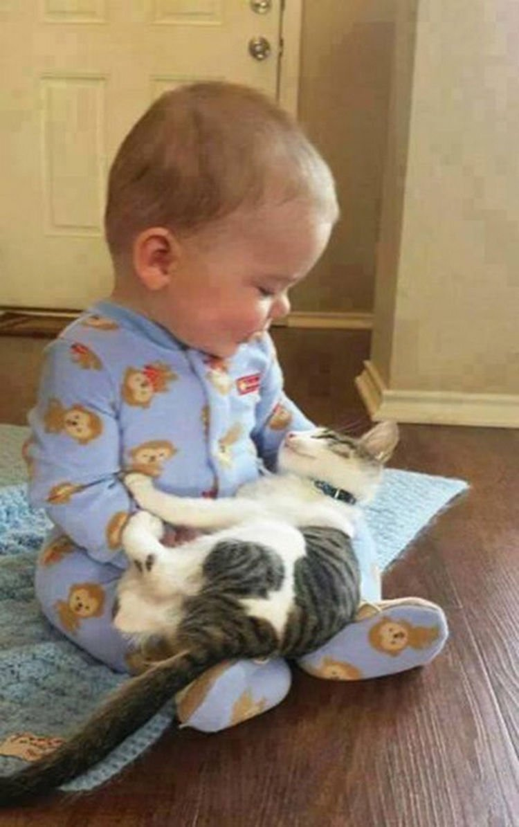 "21 Cats Babysitting Babies - ""How"