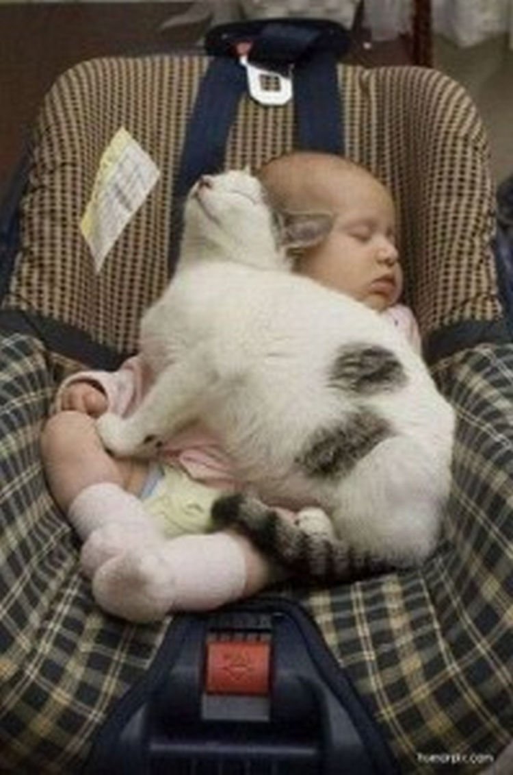 "21 Cats Babysitting Babies - ""I love naptime in the car."""