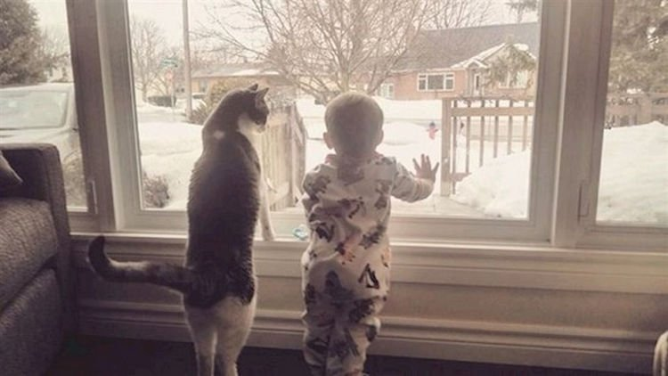 "21 Cats Babysitting Babies - ""So this is what you call snow. Pretty awesome."""