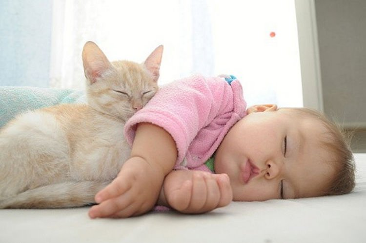"21 Cats Babysitting Babies - ""You"