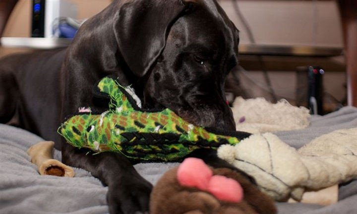 35 House Cleaning Tips - Washing your dog