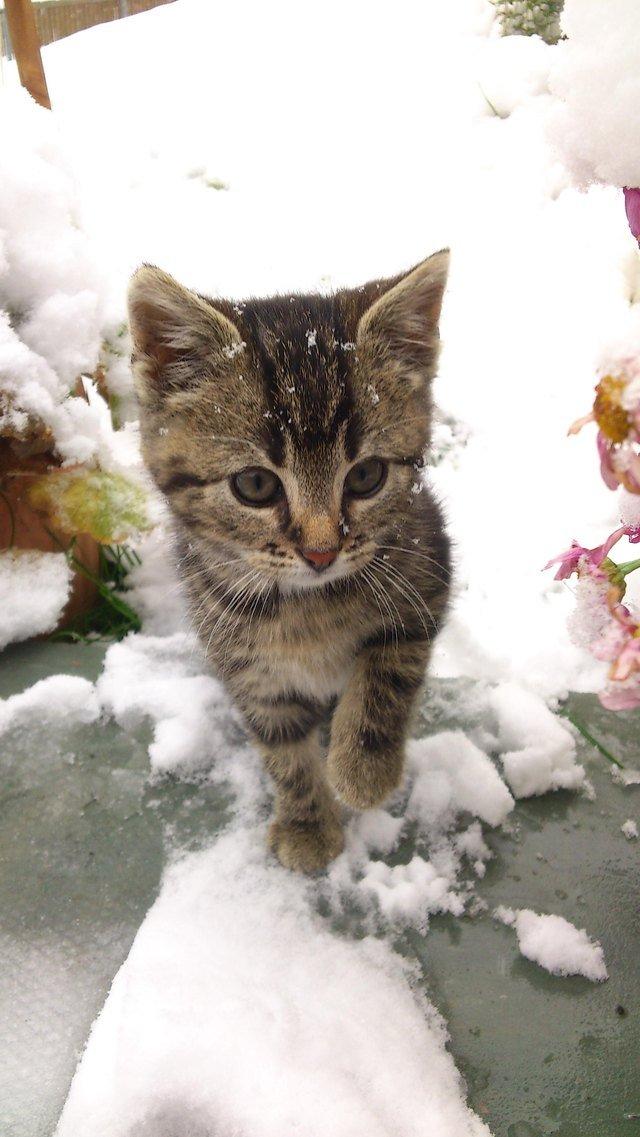 Kitten in snow.