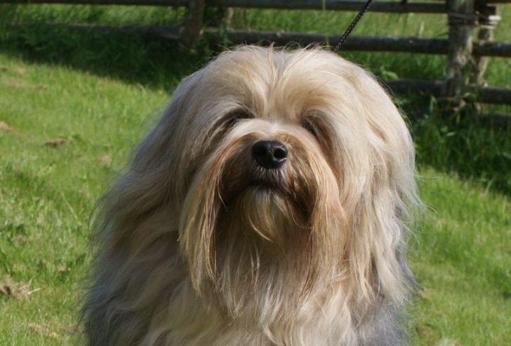 23 Rare Dog Breeds - Lowchen.