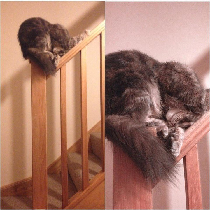 24 More Cats Asleep in a State of Bliss in Interesting Places 04