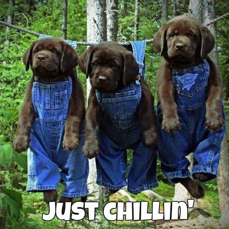 "27 Funny Animal Memes - ""Just chillin"