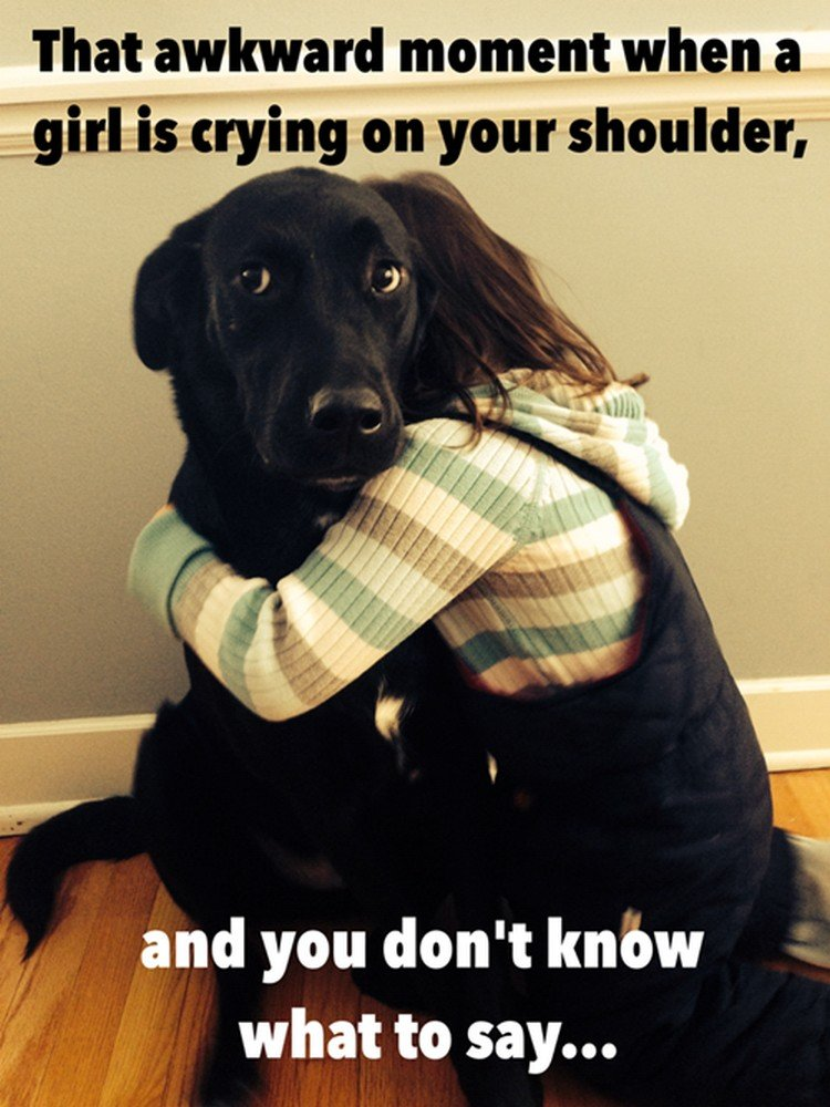 """27 Funny Animal Memes - """"That awkward moment when a girl is crying on your shoulder and you don"""