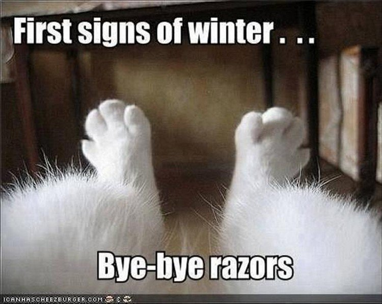 "27 Funny Animal Memes - ""First signs of winter. Bye-bye razors."""