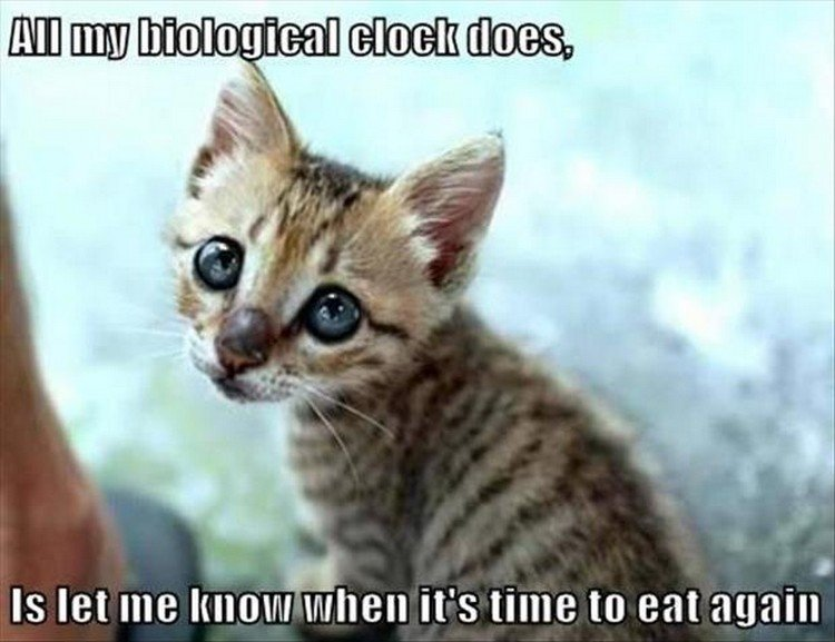 "27 Funny Animal Memes - ""All my biological clock does is let me know when it"