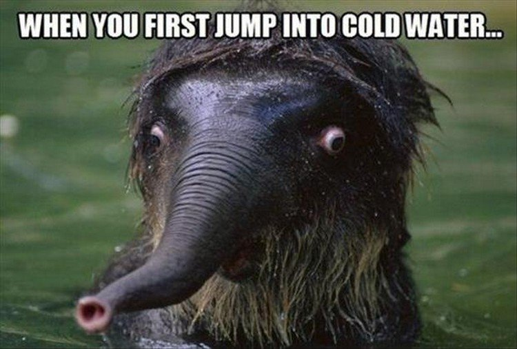 "27 Funny Animal Memes - ""When you first jump into cold water..."""