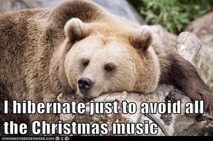 "27 Funny Animal Memes - ""I hibernate just to avoid all the Christmas music."""