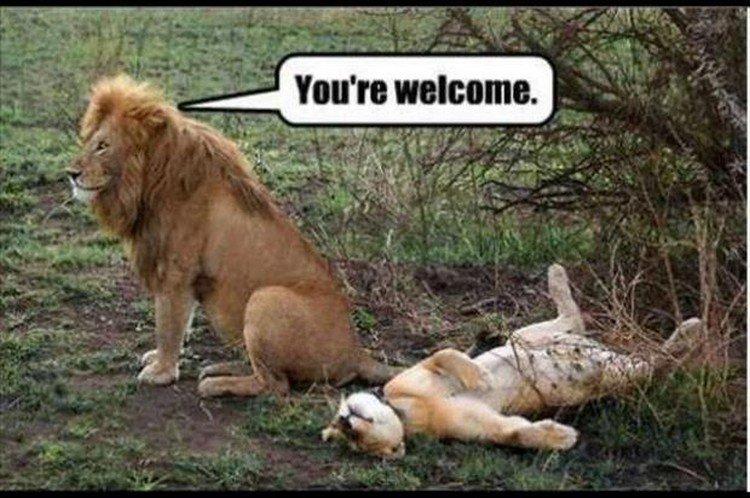"27 Funny Animal Memes - ""You"