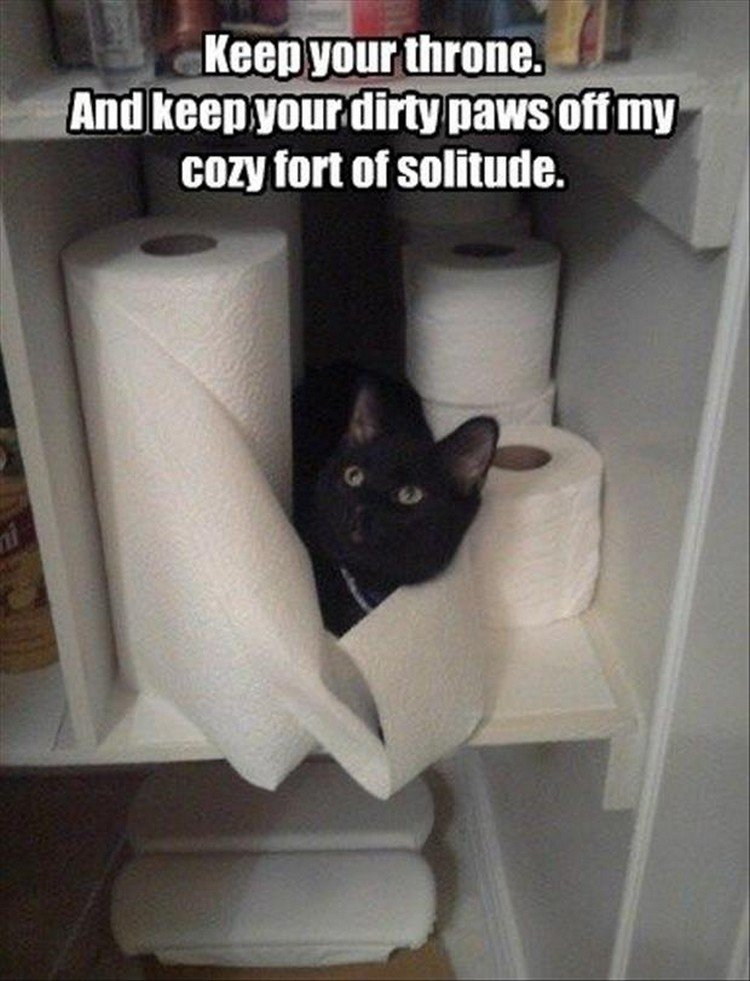 "27 Funny Animal Memes - ""Keep your throne. And keep your dirty paws off my cozy fort of solitude."""