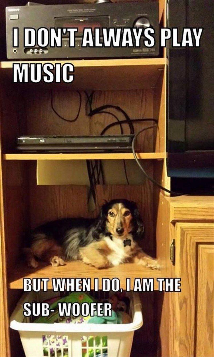 "27 Funny Animal Memes - ""I don"