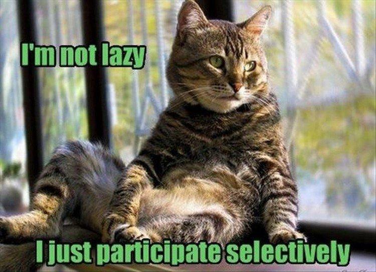 "27 Funny Animal Memes - ""I"