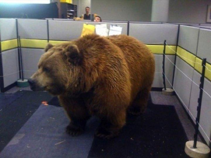 25 Office Pranks - Do NOT feed the bears.