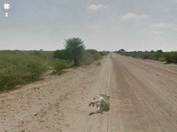 25 Weird Things Found on Google Maps - I hope that animal is OK!
