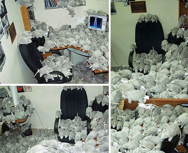 26 Funny Office Pranks - Call the exterminator!