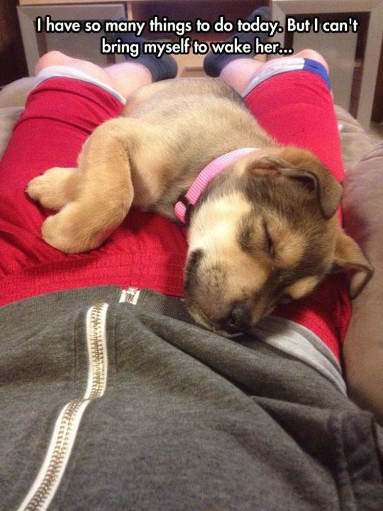 30 Things Only Dog Owners Will Understand - They will always find the most comfortable place to sleep.