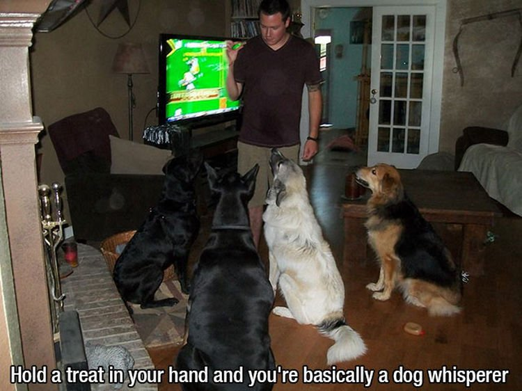 30 Things Only Dog Owners Will Understand - They also love treats!