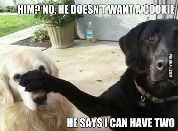 30 Things Only Dog Owners Will Understand - They will try anything to get an extra treat.