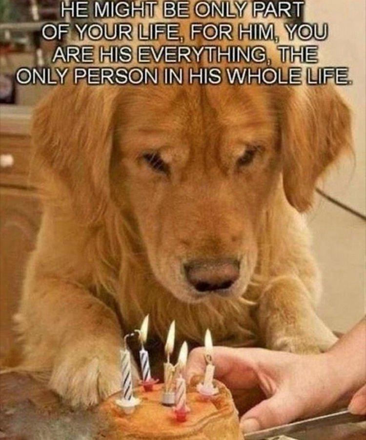 30 Things Only Dog Owners Will Understand - You are the most important thing in their life.