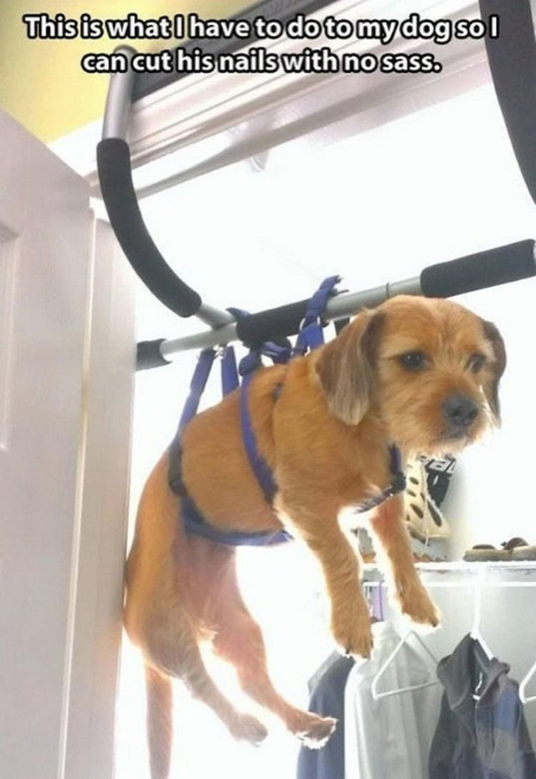 30 Things Only Dog Owners Will Understand - Improvising pays off.