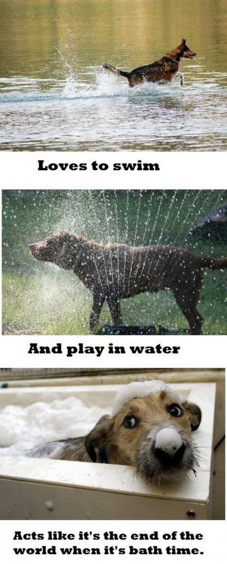 30 Things Only Dog Owners Will Understand - Maybe it
