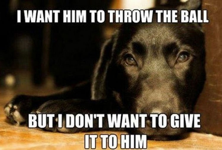 30 Things Only Dog Owners Will Understand - Fetching is an acquired skill.