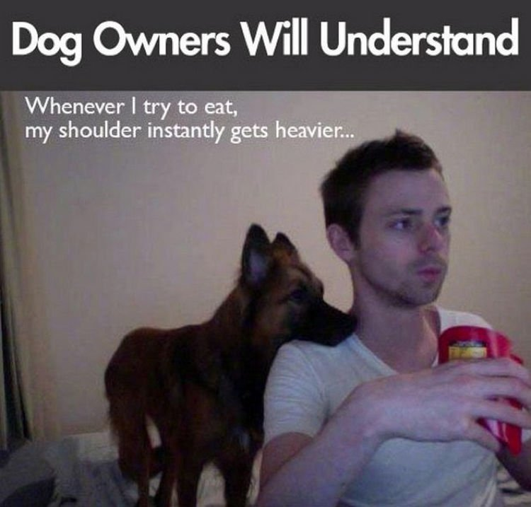 30 Things Only Dog Owners Will Understand - They