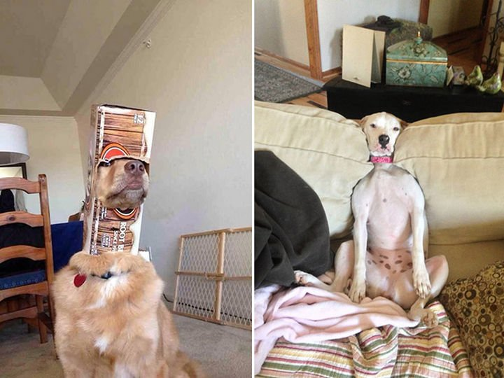 35 Photos of Animals Stuck in the Weirdest Places - These dogs are pretending nothing happened.