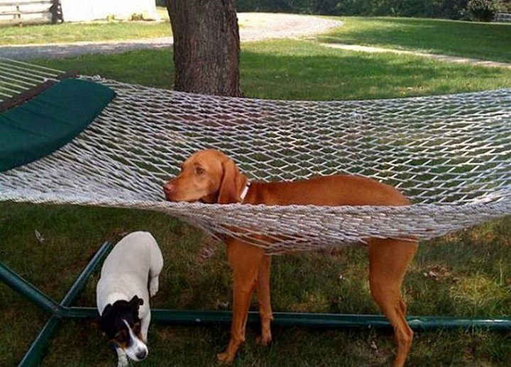 35 Photos of Animals Stuck in the Weirdest Places - Hammocks don
