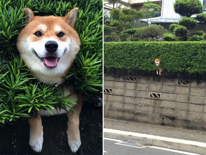 35 Photos of Animals Stuck in the Weirdest Places - Even when you