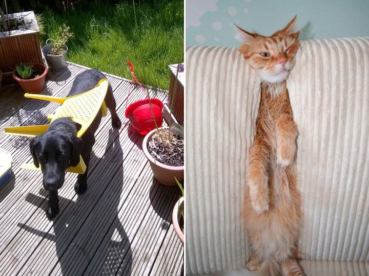 35 Photos of Animals Stuck in the Weirdest Places - I think they