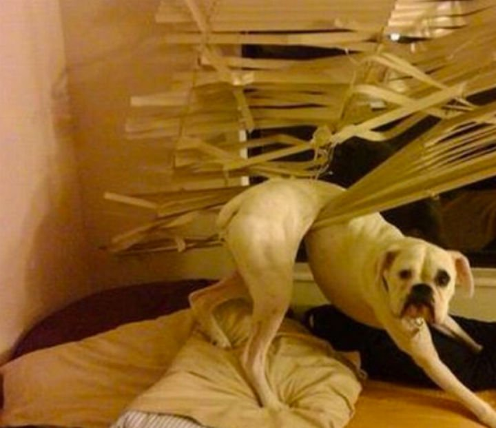 35 Photos of Animals Stuck in the Weirdest Places - I bet he