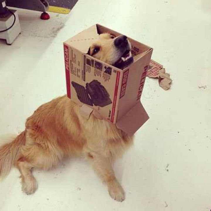 35 Photos of Animals Stuck in the Weirdest Places - He wants to show you his new costume!