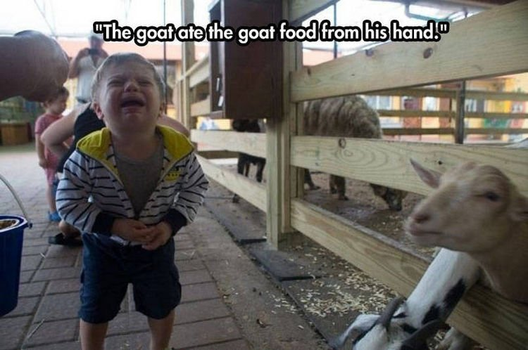 37 Photos of Kids Losing It - The goat ate the goat food from his hand.