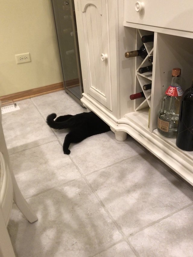 Cat reaching underneath cupboard