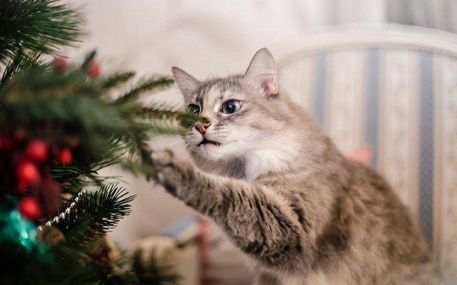 Cat touching Christmas tree