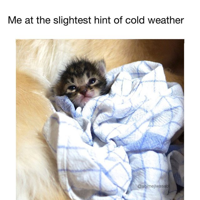 Kitten wrapped in blanket. Me at the slightest hint of cold weather.